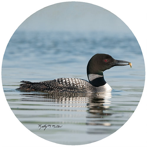 Loon with Fish - KML4