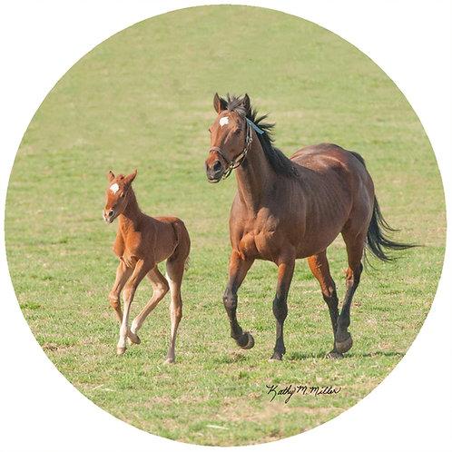 Horse & Pony - KMHO1