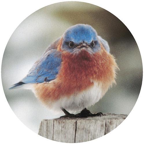 Mad Blue Bird - MBB