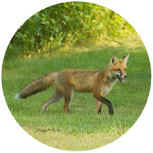 Fox - KMF2