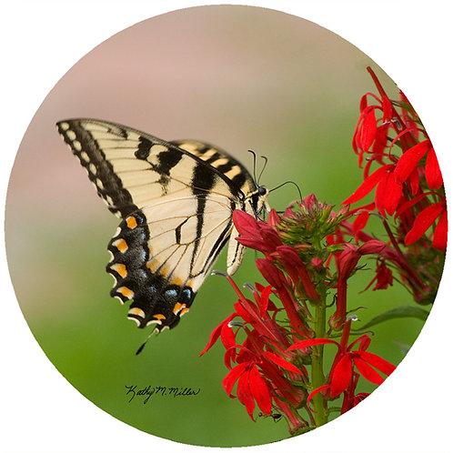 Swallowtail Butterfly - KMBF2