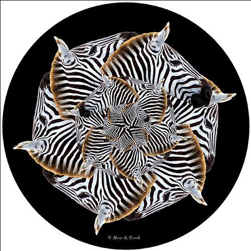Zebra - MC Z