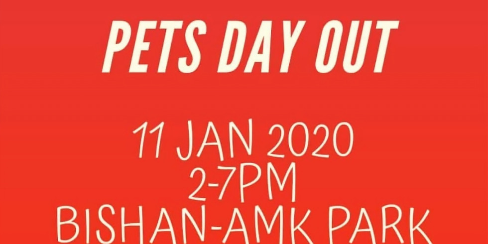 Pets' Day Out