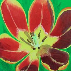 Rote Tulpe 50 x 50 cm