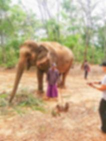 Agence de voyage Thailande elephants.jpg