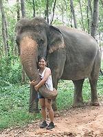 elephants 2.jpg