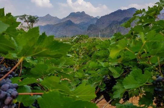circuits thailande-granmonte asoke valley