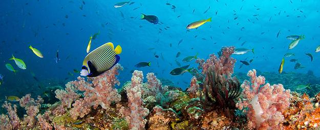 snorkeling koh lanta - organiser voyage thailande
