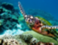 tortue koh lanta - blog voyage thailande