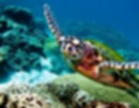 plongée koh lanta - organisateur voyage thailande