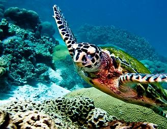 plongée koh lanta - thailande vacance
