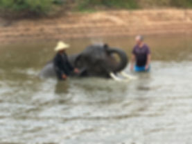 elephants 4.jpg