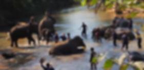 elephants thailande - guide touristique thailande
