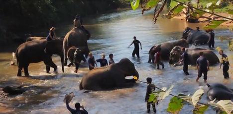 elephants thailande - thailande vacance