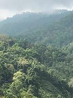 forêt thailande - conseils voyage thailande