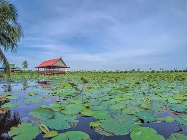 tour-operator-thailande-KLONGS-MAHA-SAWAT.jpg