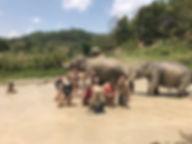 bain elephants