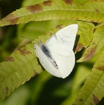ferme de papillons laos - conseils voyage thailande