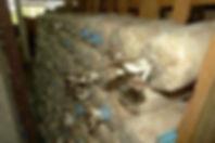 champignons 1.jpg