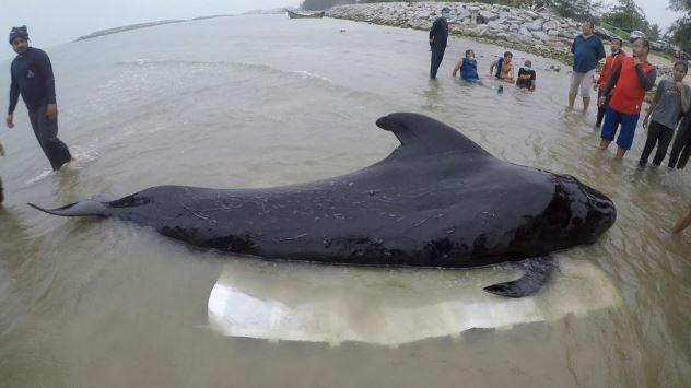 une baleine meurt en thailande - organiser son voyage en thailande