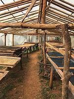 ferme café organique thailande - conseils voyage thailande