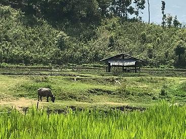 elephants thailande - voyages thailande circuit