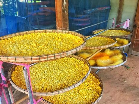 Agence locale francophone Thailande route de la soie.jpg