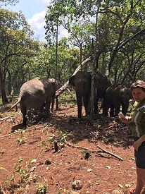elephant sanctuary chiang mai - voyages thailande circuit