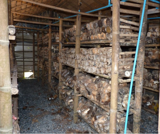 specialiste voyage thailande-ferme champignons thailande