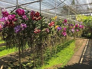 mae sa chiang mai - conseils voyage thailande