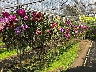 ferme orchidées thailande - thailande sejours
