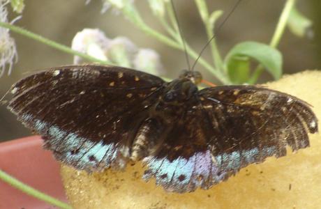 papillons kuang si falls - organisateur voyage thailande