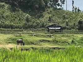 elephant nature.jpg