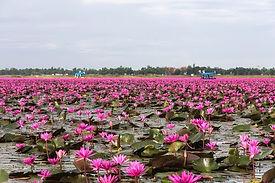 sejours-thailande-lac-lotus.jpg