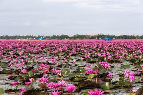 voyagiste thailande-lac des lotus nongkhai