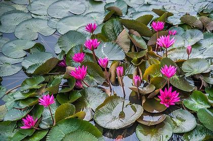 Sejours Thailande KLONGS MAHA SAWAT.jpg