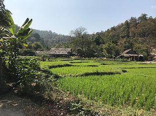 tong luang - voyages thailande circuit