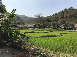 tong luang - organiser voyage thailande