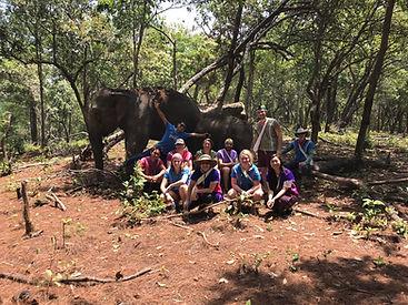 sanctuaire elephants chiang mai - voyages thailande circuit