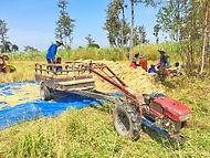 rizières 4.jpg