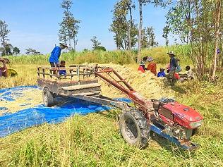 Sejours Thailande rizières.jpg