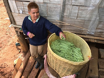 ferme organique thailande - thailande vacance
