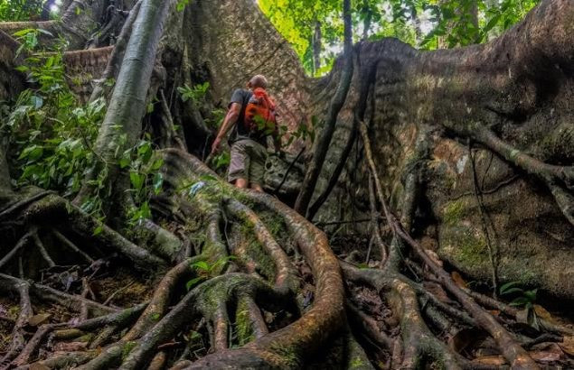 tour operator thailande-jungle khao sok