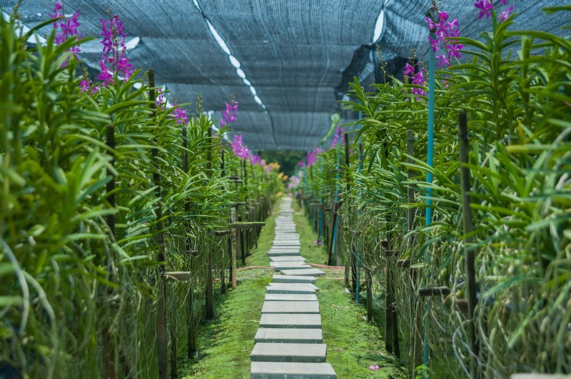 agence locale thailande-orchidees