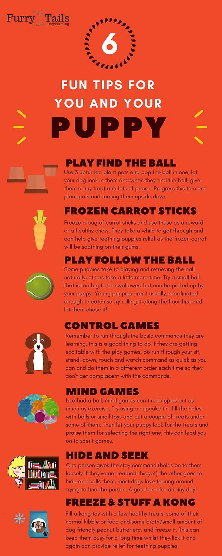 Fun puppy tips