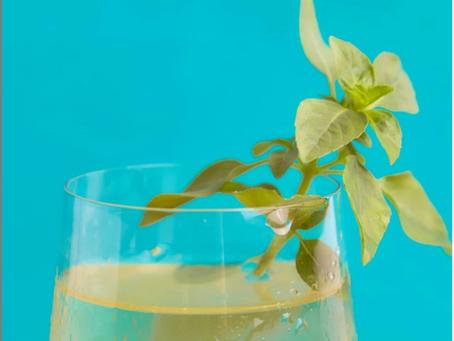 Você sabe a diferença entre chá e infusão?