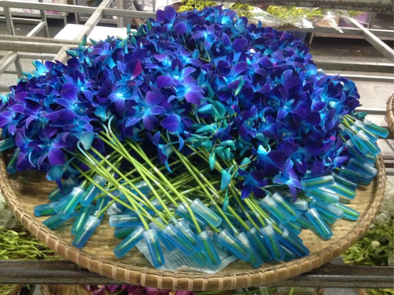 freshcut orchid 10