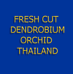 fresh cut orchid thailand