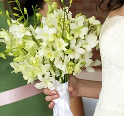 thai orchid 2