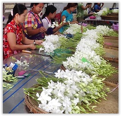 wholesale orchid